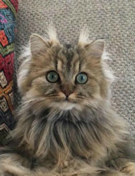 Fotografije koje će RAZUMETI samo vlasnici mačaka
