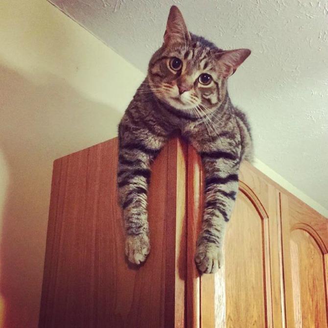 8 Fotografije koje će RAZUMETI samo vlasnici mačaka