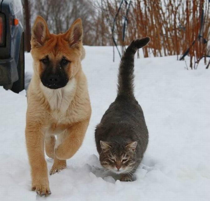 Fotografije PRIJATELJSTVA koje će vas oduševiti2 Psi i mačke: Fotografije PRIJATELJSTVA koje će vas oduševiti