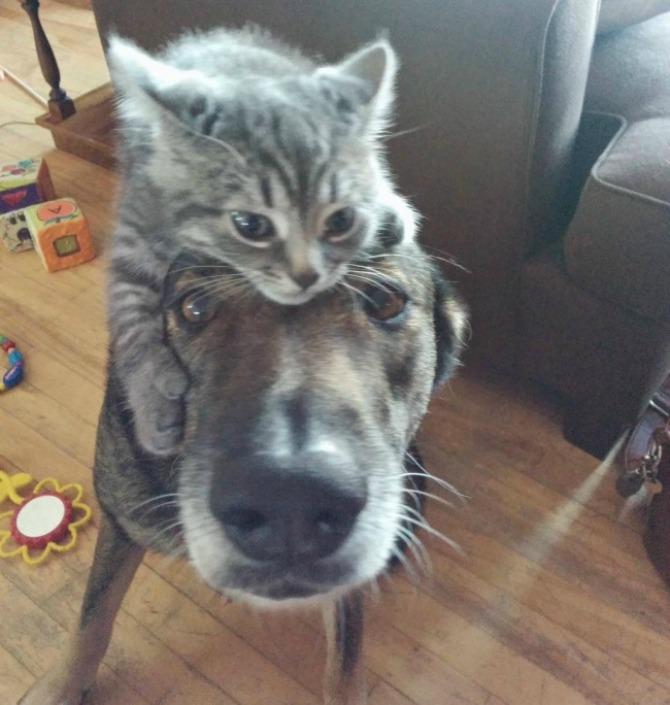 Fotografije PRIJATELJSTVA koje će vas oduševiti3 Psi i mačke: Fotografije PRIJATELJSTVA koje će vas oduševiti