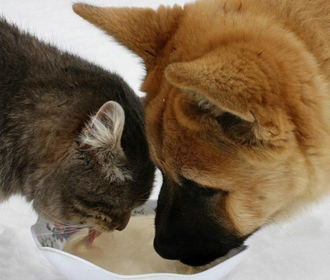 Fotografije PRIJATELJSTVA koje će vas oduševiti4 Psi i mačke: Fotografije PRIJATELJSTVA koje će vas oduševiti