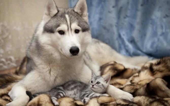 Fotografije PRIJATELJSTVA koje će vas oduševiti6 Psi i mačke: Fotografije PRIJATELJSTVA koje će vas oduševiti