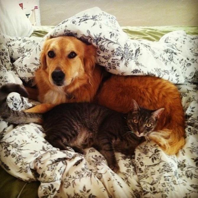 Fotografije PRIJATELJSTVA koje će vas oduševiti7 Psi i mačke: Fotografije PRIJATELJSTVA koje će vas oduševiti