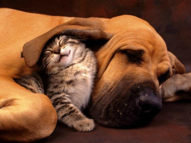 Fotografije PRIJATELJSTVA koje će vas oduševiti8 Psi i mačke: Fotografije PRIJATELJSTVA koje će vas oduševiti