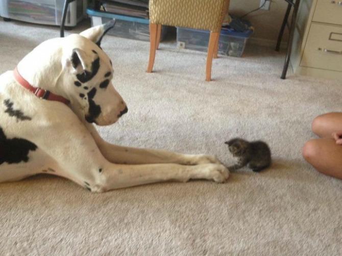 Fotografije PRIJATELJSTVA koje će vas oduševiti9 Psi i mačke: Fotografije PRIJATELJSTVA koje će vas oduševiti