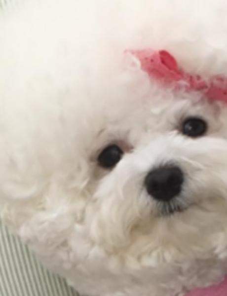 Da li je ovo najslađi pas na svetu?