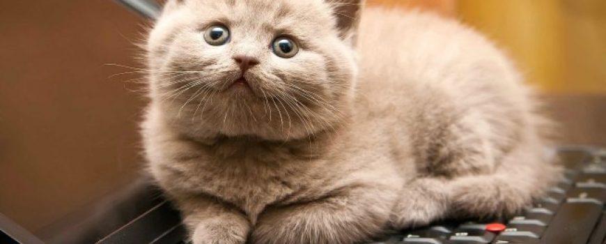 Stvari koje razumeju samo vlasnici mačaka