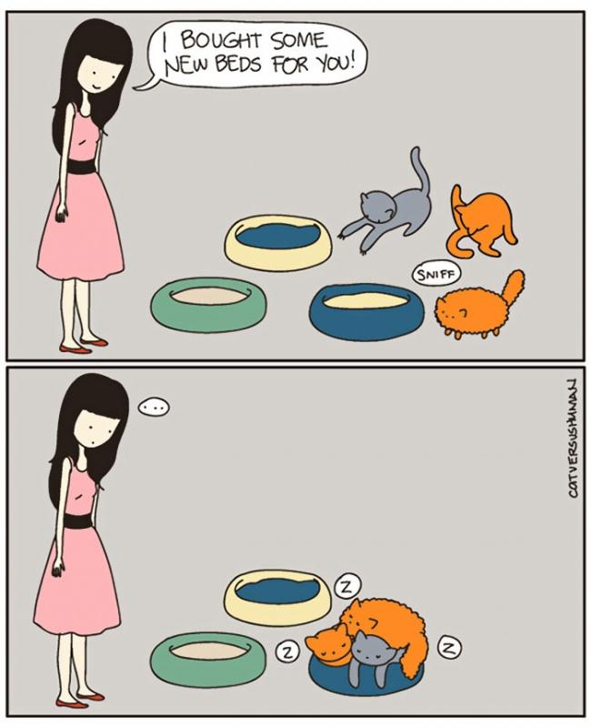 macke 14 Otkačene, a tako istinite ilustracije koje će razumeti SVAKI vlasnik mačaka