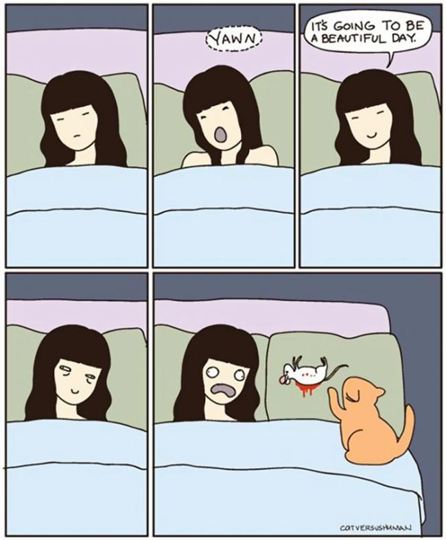 make 10 Otkačene, a tako istinite ilustracije koje će razumeti SVAKI vlasnik mačaka