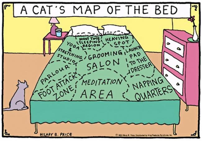 mcke 9 Otkačene, a tako istinite ilustracije koje će razumeti SVAKI vlasnik mačaka
