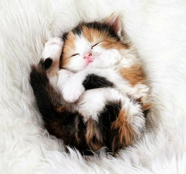 macke2 Zašto su ljubitelji mačaka srećniji od drugih?