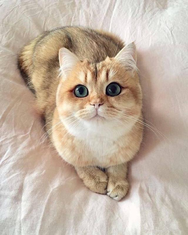 macke3 1 Zašto su ljubitelji mačaka srećniji od drugih?