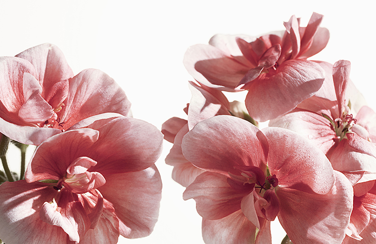 burberry 5 Mirisi nove modne sezone: Po kom ćeš parfemu biti prepoznatljiva ove jeseni?