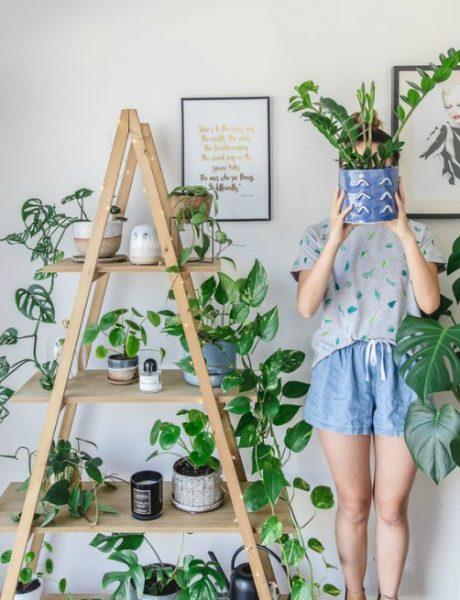 Zeleno, volim te, zeleno: 5 sobnih biljaka koje će ti pomoći da se osećaš bolje