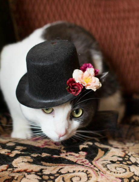 8 razloga da još danas nabaviš mačku