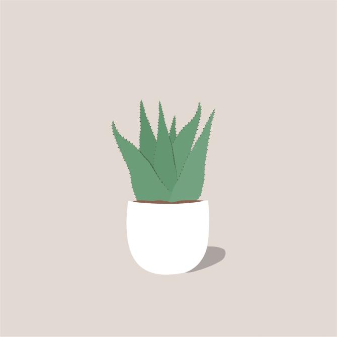 aloe 1511908510 Ilustrovani vodič kroz besmrtne sobne biljke