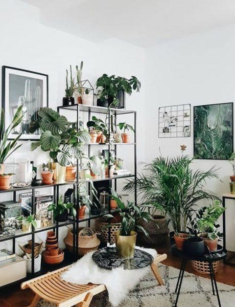 Stylish i veseo dom: Biljke koje su ti neophodne u kući