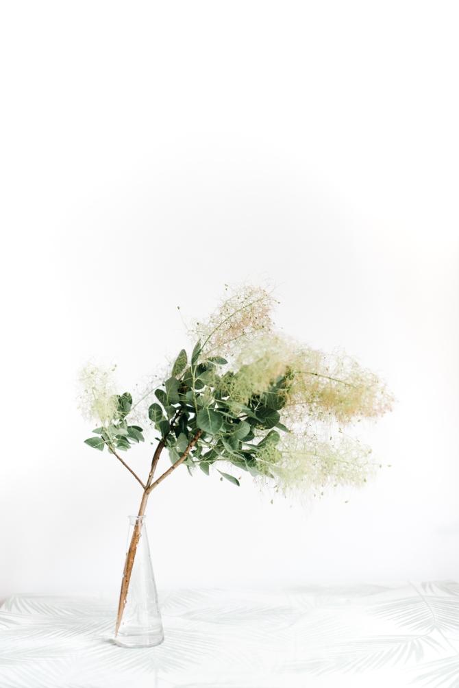 cveće Predmeti koji privlače lošu energiju i koje treba da izbaciš iz kuće