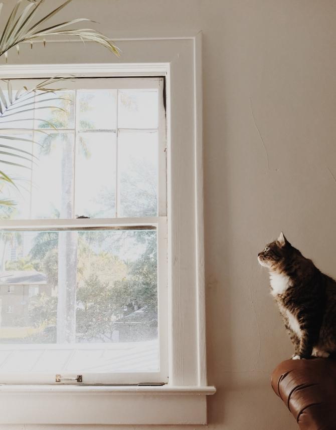 mačke 1 Životne lekcije koje treba da naučiš   od svoje mačke