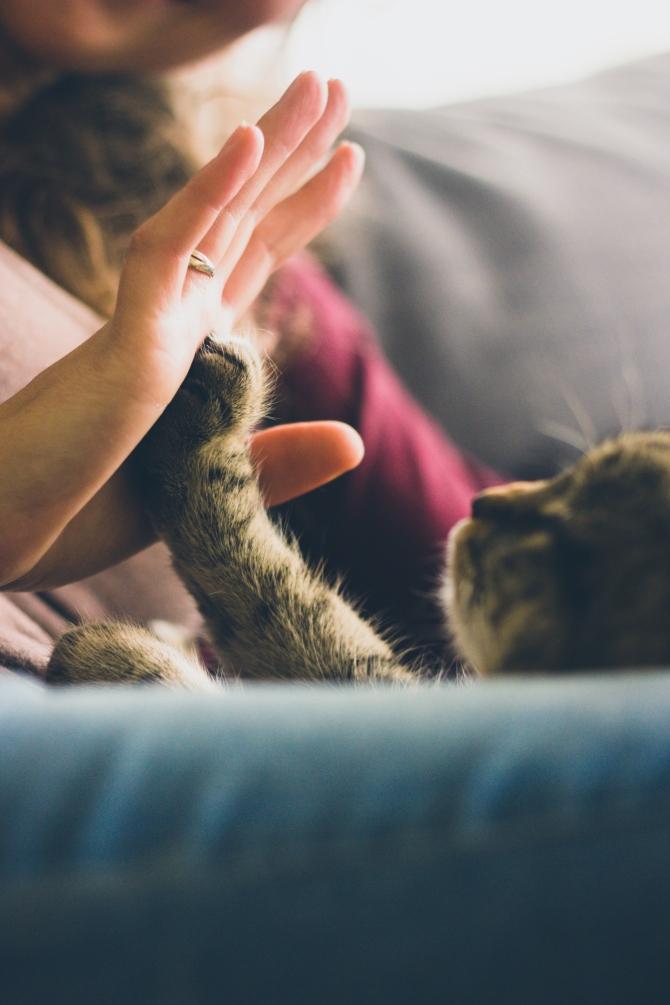 mačke Životne lekcije koje treba da naučiš   od svoje mačke