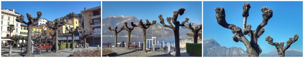 bellagio drvored 1 Nastavak milanske avanture: Jezero Komo