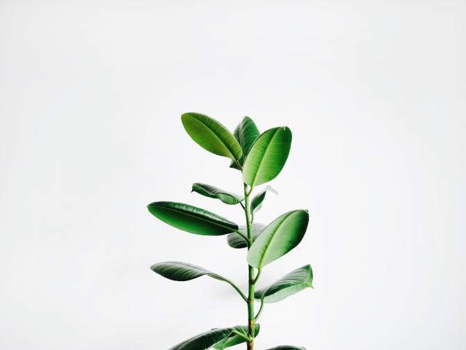 biljke 1 Feng šui: Sobne biljke koje privlače dobre vibracije