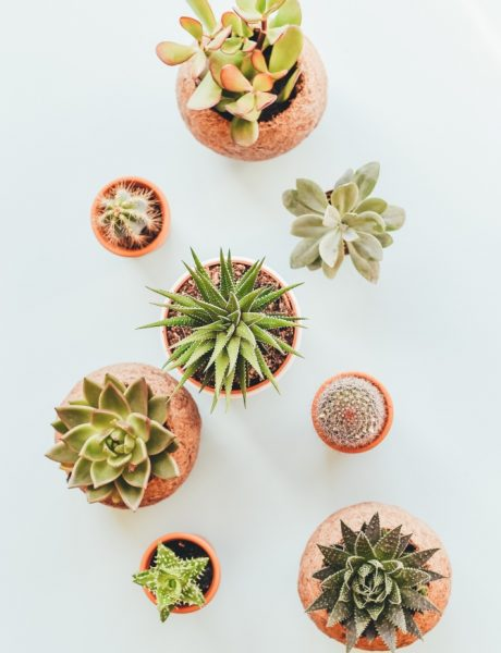 Feng šui: Sobne biljke koje privlače dobre vibracije