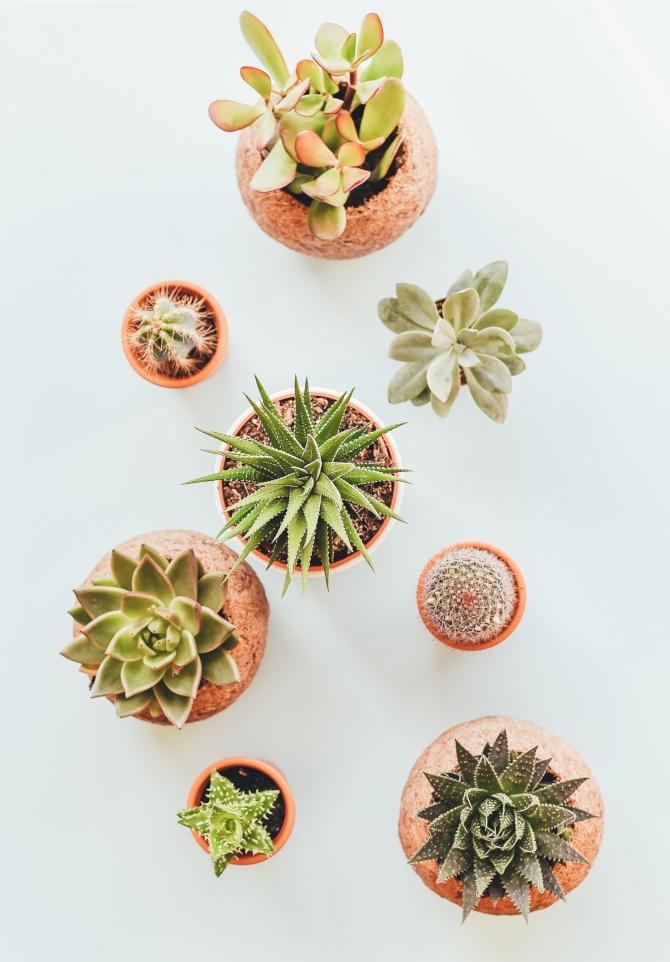 biljke 2 1 Feng šui: Sobne biljke koje privlače dobre vibracije