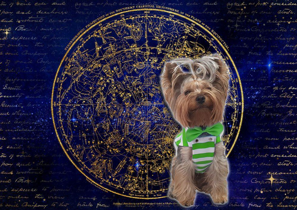 djole 1 e1563794407270 Đoletove avanture: Veliki đoletovski horoskop za ljubav