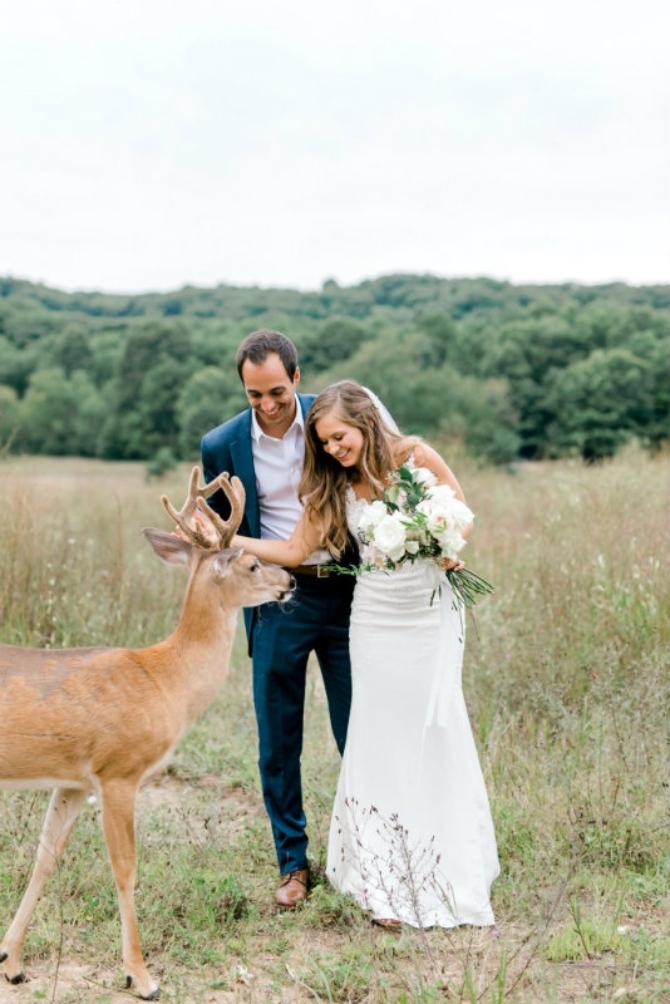 slika 8 1 Prelepe slike sa venčanja sa jednim rogatim nezvanim gostom