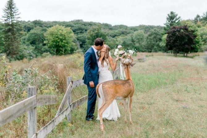 slika4 1 Prelepe slike sa venčanja sa jednim rogatim nezvanim gostom