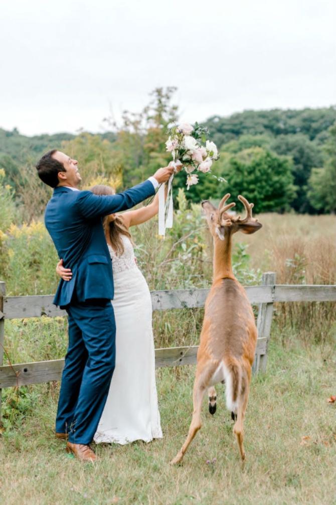 slika5 1 Prelepe slike sa venčanja sa jednim rogatim nezvanim gostom