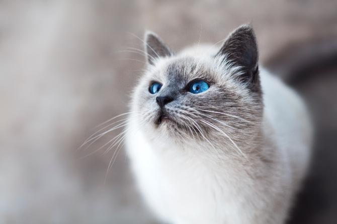8 znakova da te tvoja maca voli 2 1 8 znakova da te tvoja maca voli + kako da joj uzvratiš