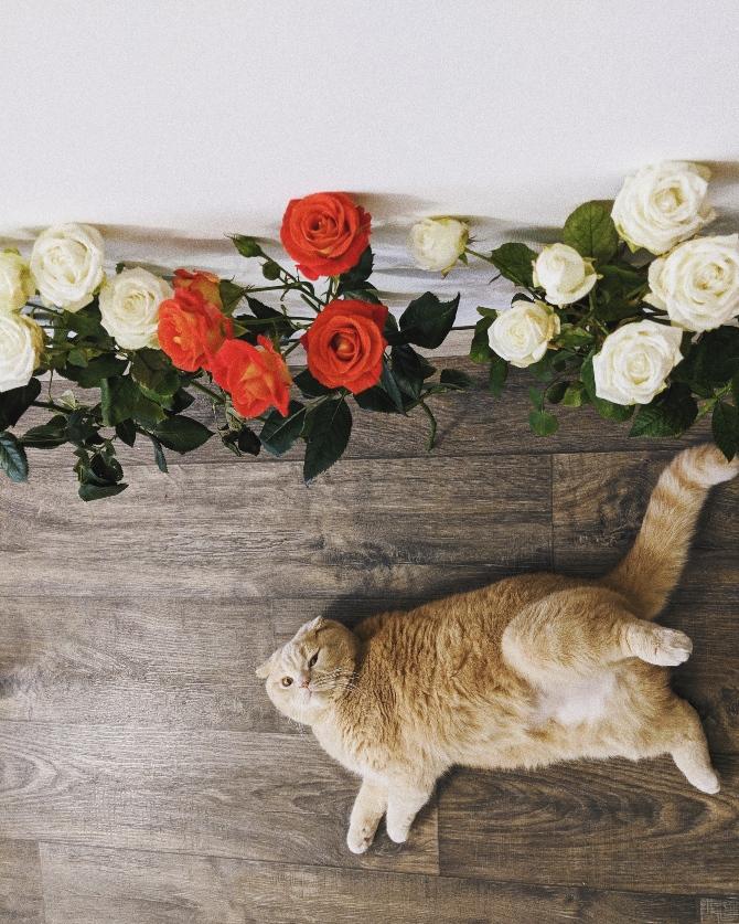 8 znakova da te tvoja maca voli 3 1 8 znakova da te tvoja maca voli + kako da joj uzvratiš