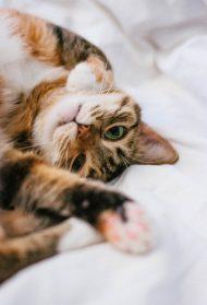 8 znakova da te tvoja maca voli + kako da joj uzvratiš