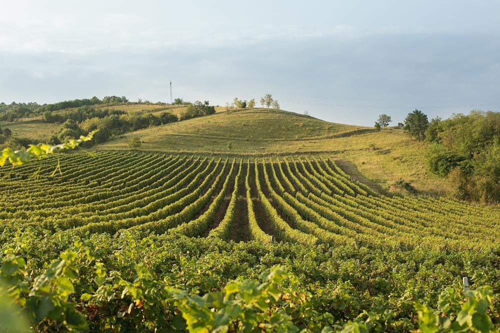vino Savršena vina za savršen ulazak u 2020!