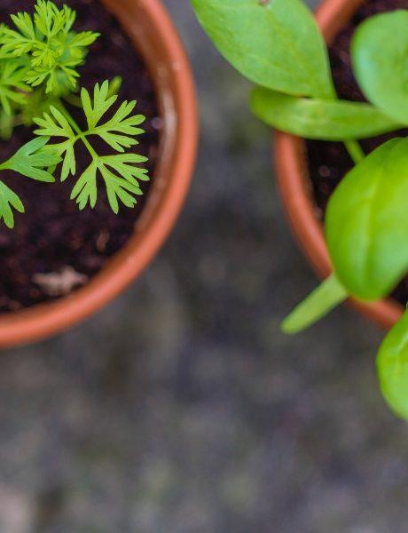 Kako da uzgajite začine u svom stanu
