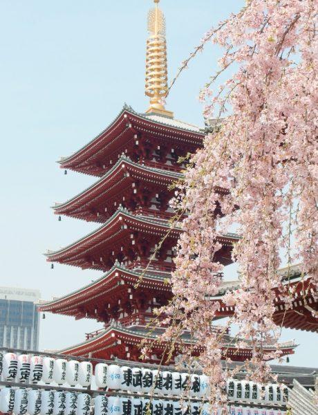 Kulturološke razlike – mudre i korisne stvari koje bi trebalo da naučimo od Japanaca