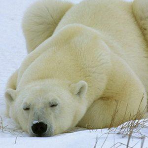 Kako se probuditi iz zimskog sna?