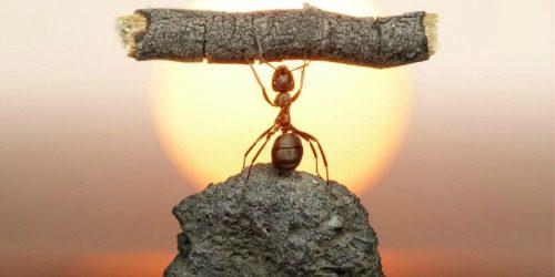 Snimi ovo: Zanimljive činjenice o mravima