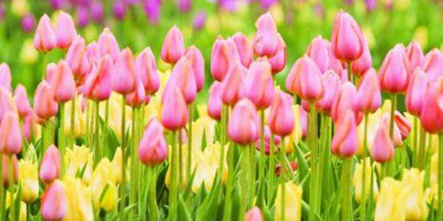 Proleće je vreme za nove početke