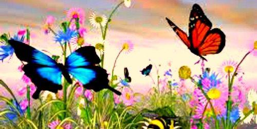 Cigla u glavi: Leptiriću, šareniću