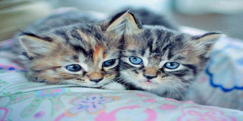 Umiljate životinje: Mačke