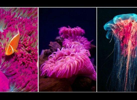 Doza nauke i kulture: Priroda u nijansama ružičaste boje