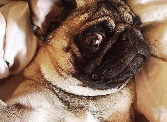 Selfie manija: Kad bi životinje pravile selfije