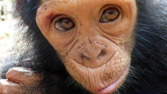 Slatka stvorenja: Bebe životinja