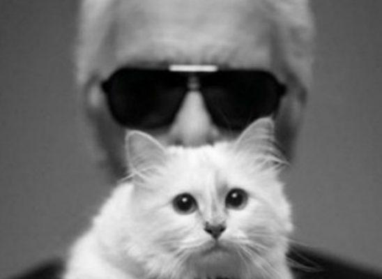 Da li ste znali: Karl Lagerfeld posvetio knjigu svojoj mački!