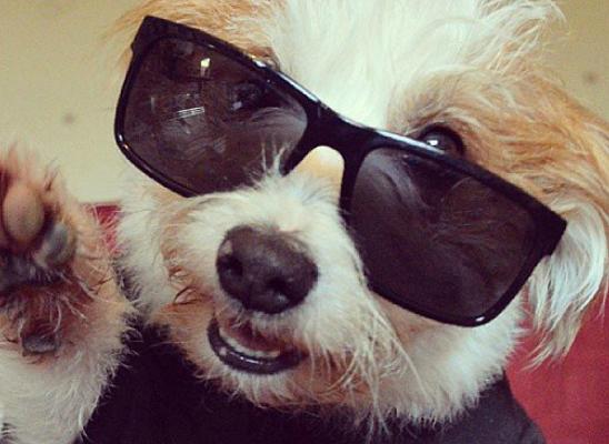 Džini: Najsrećniji pas na Instagramu