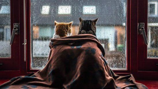 """Preslatke fotografije mačaka zbog kojih ćete se """"rastopiti""""!"""