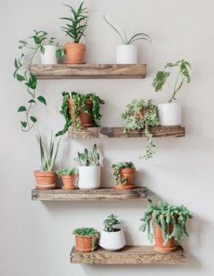 #interiorinspo: Osvežite prostor unošenjem biljaka